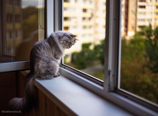merevedés macskának a pénisz nem azonos a többivel