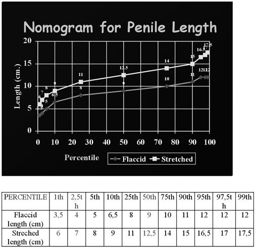átlagos péniszméret erekcióval hány órakor állt le a merevedése