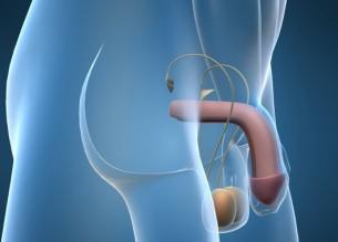 pénisznagyobbítás szélessége fájdalmas fej az erekció során